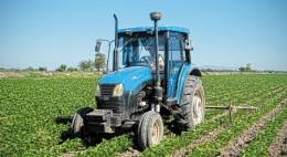 Por aprobarse los apoyos a la inducción Tanto el sorgo como el trigo son buena opción para el ciclo agrícola otoño – invierno