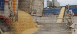 Esperan que bancos liberen créditos para apoyos del maíz
