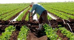 Sin afectaciones en cultivos de Culiacán por heladas Hace días se detectaron cifras climáticas de -1.4 grados centígrados