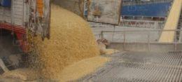 Sigue a la alza precio del maíz, por sí solo alcanza los 3 mil 800 t