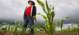 Aumentan ingresos más de 200 mil productores de maíz