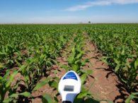 Es necesario buscar estrategias para elevar la eficiencia del uso del nitrógeno en campo: Leonardo Lugo Gaxiola