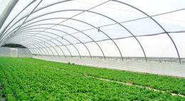 Invertir en la agricultura, una megatendencia anunciada.