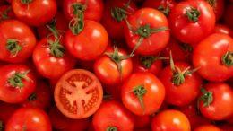 EUA anuncia su salida de acuerdo antidumping, existen nuevas amenazas de impuestos para el tomate mexicano