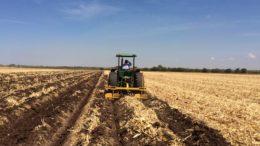 Verano AARC 2019 Un buen manejo de residuos de maíz contribuye a una mejor ganancia