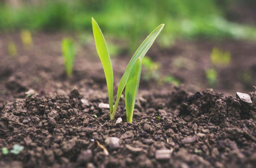Restringir la importación de glifosato provocaría grandes pérdidas al agro: AARC