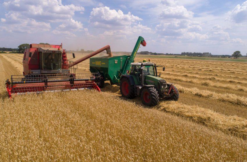Tendencia alcista de granos podría mantenerse a inicios de 2021