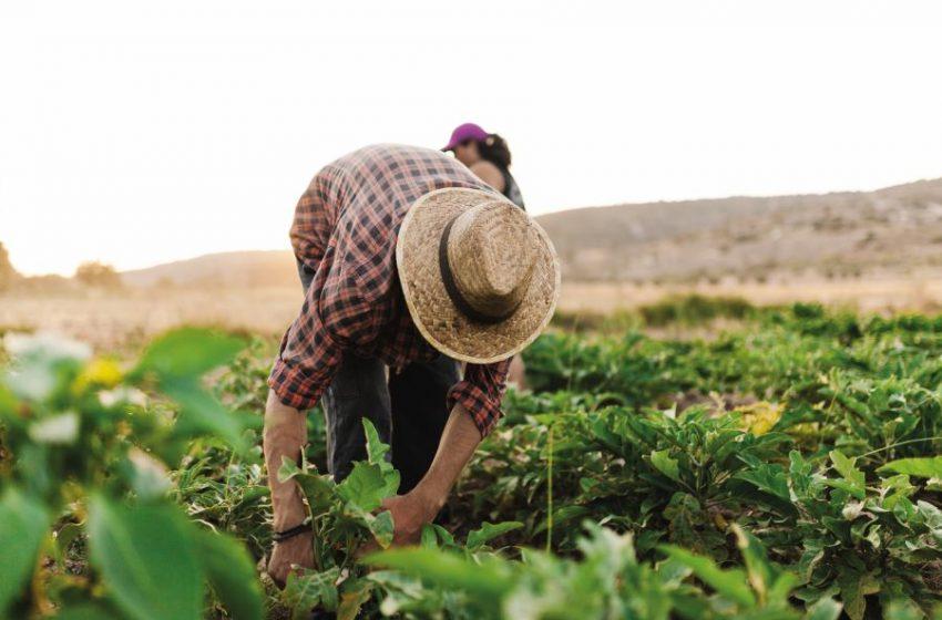 60 años de Cambio Climático, han reducido el 21 por ciento de la productividad agrícola