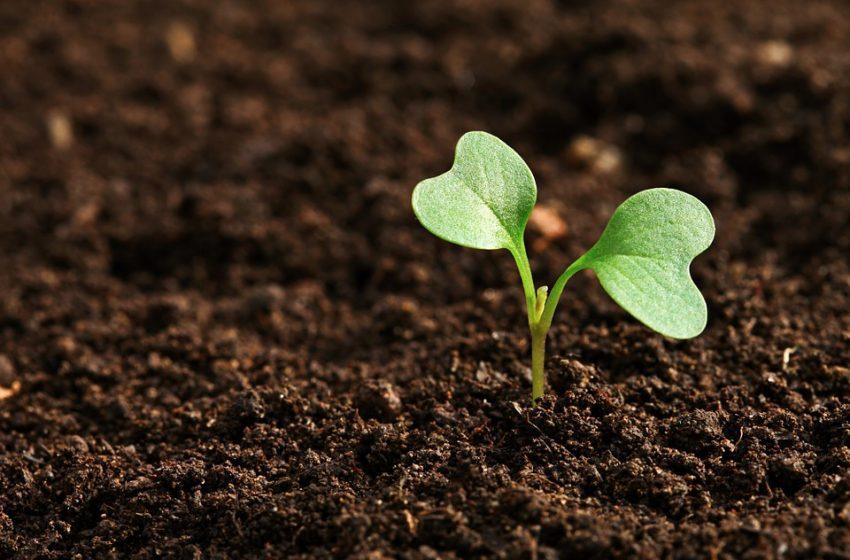 Los organismos del suelo, aliados silenciosos de la sostenibilidad alimentaria: FAO