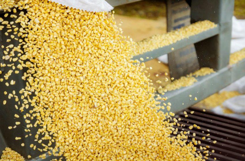 Pronostican mayor producción de maíz en EU en 2021-2022