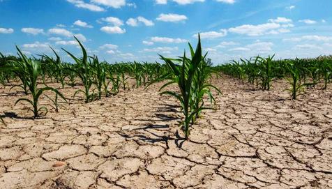 Sequía afecta rendimientos de maíz de EU