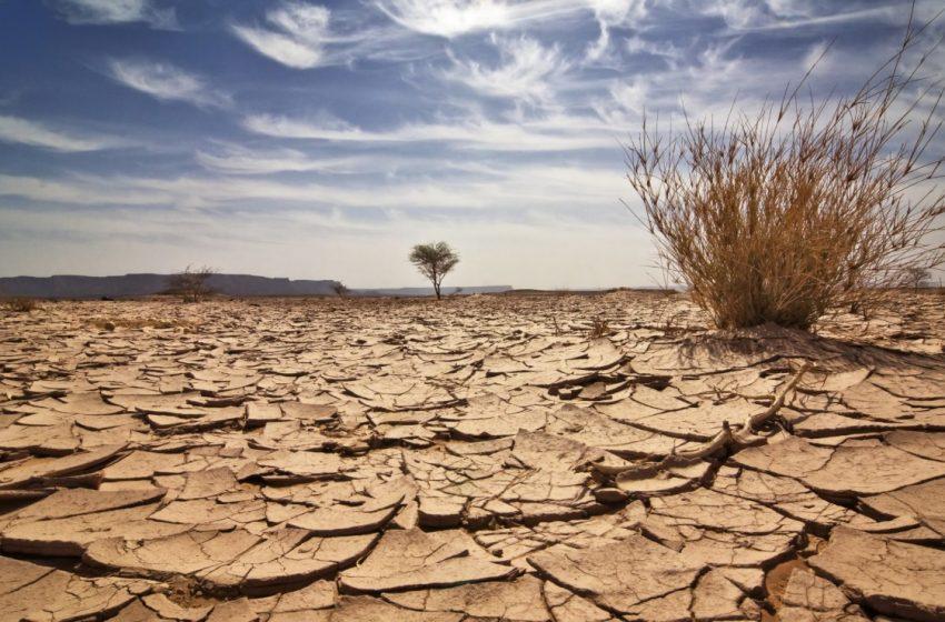Plantean acciones para disminuir la incertidumbre del campo, ante la sequía en México