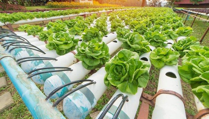 Lo que debes de saber para iniciar un cultivo hidropónico exitoso: Verano AARC 2021