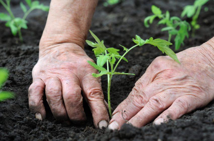 Agricultura regenerativa, la nueva tendencia en el comercio minorista