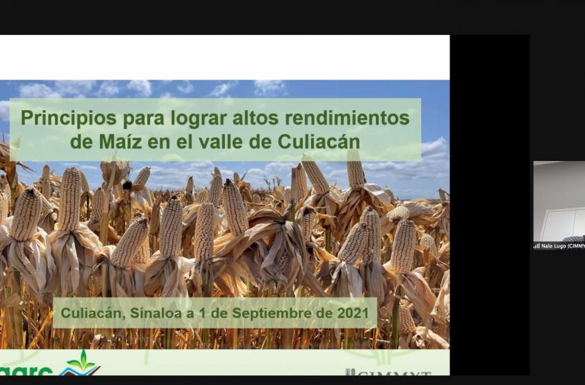 El CIMMYT revela los principios del alto rendimiento en maíz en el Valle de Culiacán en el Verano AARC 2021
