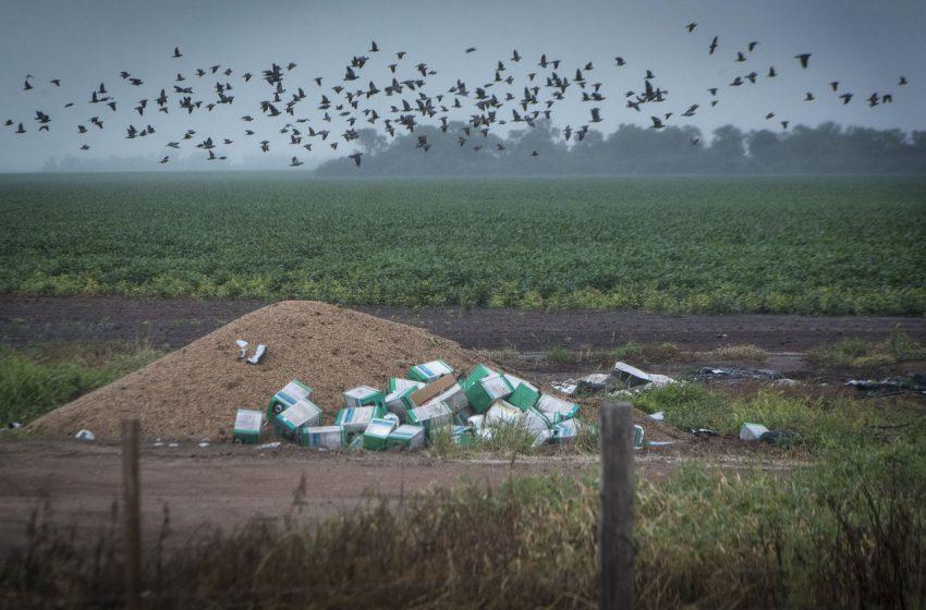 87% de los apoyos agrícolas distorsionan los precios o dañan la naturaleza y la salud: FAO, PNUD y PNUMA