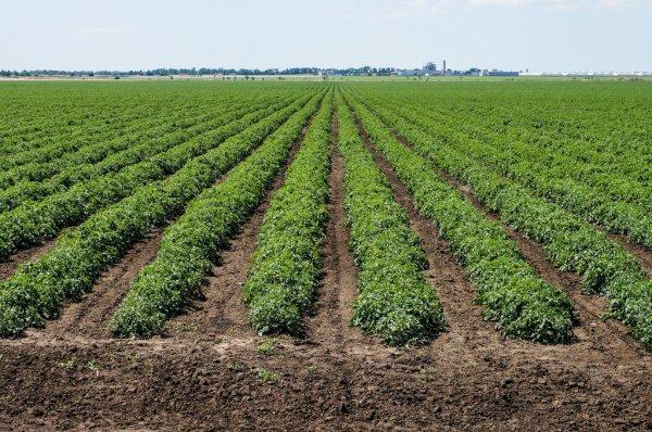 Faltan apoyos para la agricultura comercial en Proyecto de Presupuesto 2022