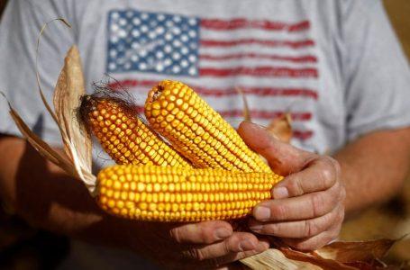 Baja precio de maíz por mejores rendimientos de EU